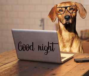 cute dog good night image