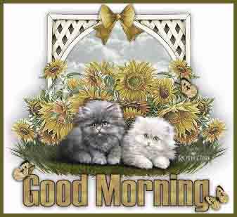 download wallpaper of good morning