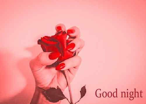 romantic rose image with good night