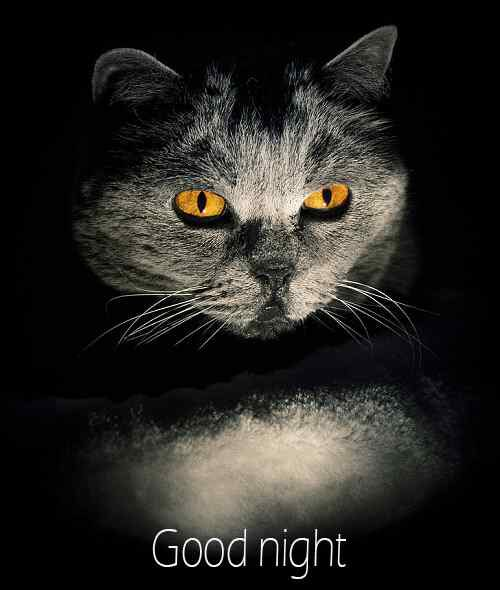 best pic of good night for fb