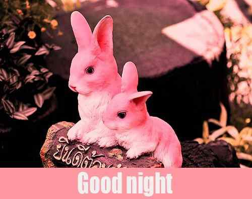 cute picture of good night download