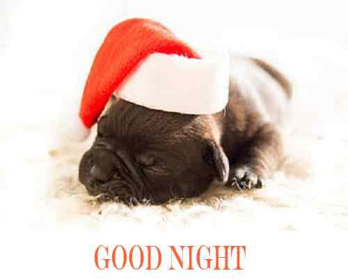 cute puppy image with good night
