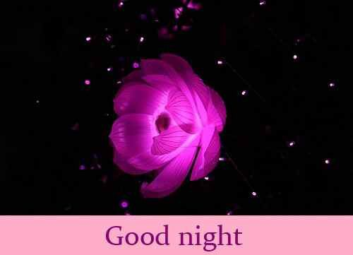 romantic wallpaper of rose with good night
