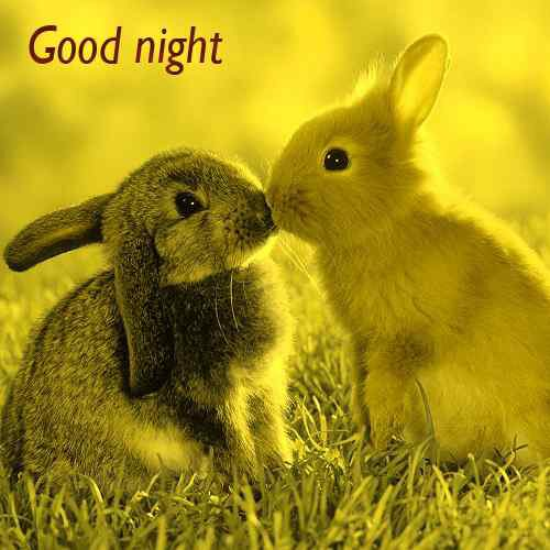 sweet pictures of good night for best friend