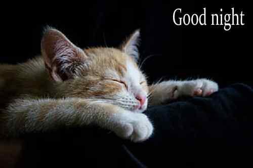 top cute cat image download